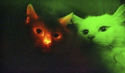 Glowing Cloned Cats