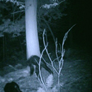 Photo: Pa. hunter's images stir Bigfoot debate