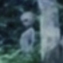Photo: Is this creature pictured in the Amazon jungle a visitor from outer-space?