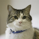 Photo: Oscar the Cat Predicts Patients' Deaths