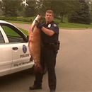 Photo: Mystery Roadkill - 5ft Carp