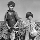 Children and the Sugar Beets